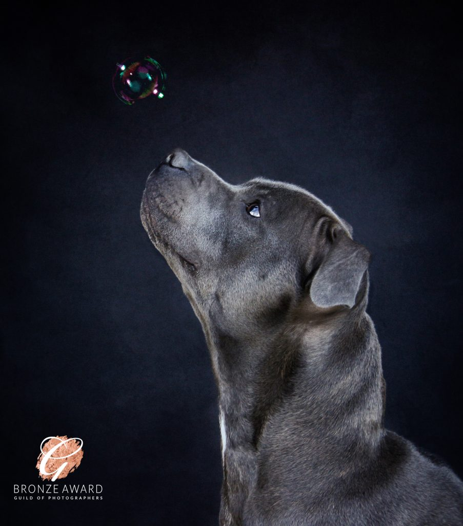 Dog Photographer Cheshire